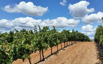 Weinberg in Spanien, Rioja (Foto: © pixabay.de)