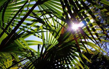Botanischer Garten (Foto: © pixabay.de)