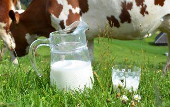 Rohmilch enthält unter anderem zahlreiche lebenswichtige Enzyme. (Foto: ©HappyAlex/Fotolia)