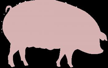 Schweinfleisch (© pixabay.de)