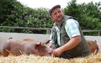 Willi Steffens mit seinen Schweinen in einem der Außenklimaställe. (Foto: © Pötterhof)