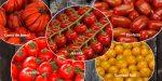 Tomatenvielfalt (Foto: © EDEKA und pixabay.de)
