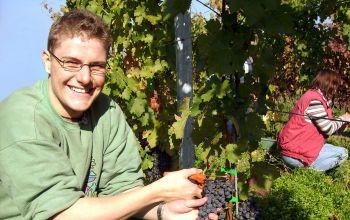 Unser Wein-Experte Eric Mellenthin bei der Handlese. (© Eric Mellenthin)