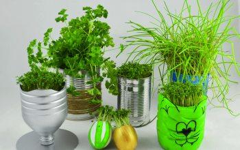 Dein kreativer Heimgarten. (Foto: © EDEKA Kempken)
