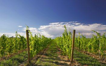 Das Weingut V8 Vineyards aus der norditalienischen Region Venetien.