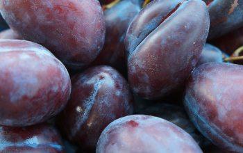 Prunus domestica - oder auch einfach nur Pflaume