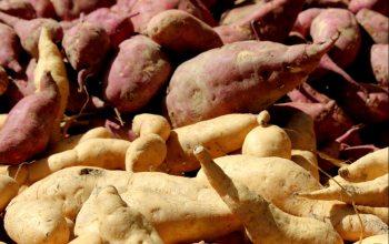 Süßkartoffel Infos Edeka Kempken